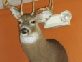 Taxidermy Services