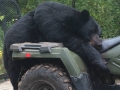 guided wisconsin black bear hunt