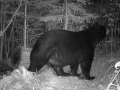 Wisconsin Black Bear Hunts
