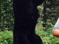 northernwisconsinbearguide1